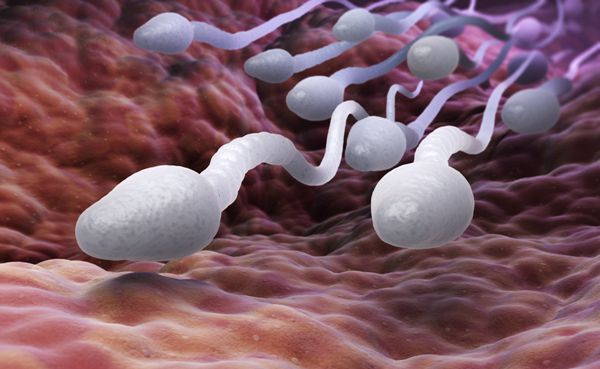 精子畸形怎么治选择试管婴儿能成功吗