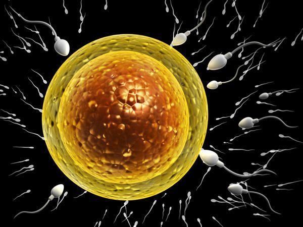 試管嬰兒促排卵泡多大可以取卵呢