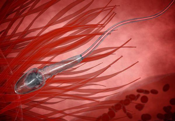 精索静脉曲张为什么会引起男性不育可以做试管婴儿吗
