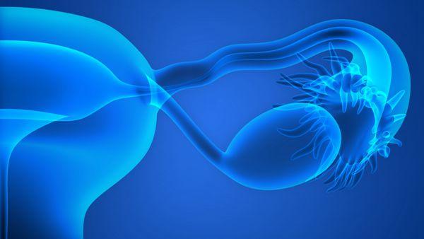 子宫腺肌症B超能看出来吗能不能试管婴儿助孕
